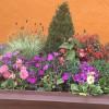 Latest Blooms :: September 2015; ?>